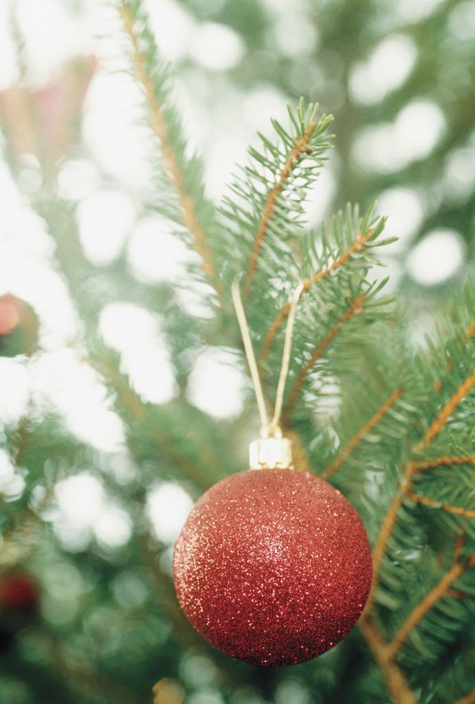 Christmas Activities 2021 Near Fraser Mi Fraser Mi Official Website